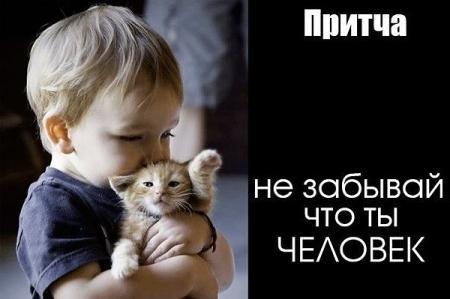 хромой котенок