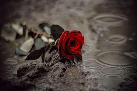 сорванный цветок