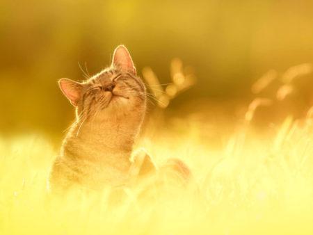получение энергии от солнца