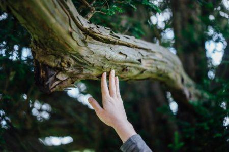 деревья потребители