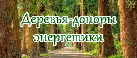 Деревья доноры и вампиры